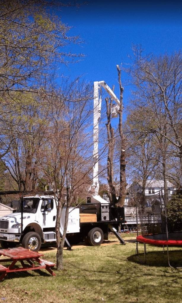 Middlesex Tree Service truck executing tree removal near Waltham, MA