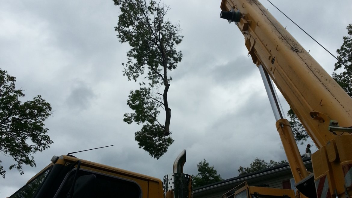 Big trees in tough spots are our specialty to remove