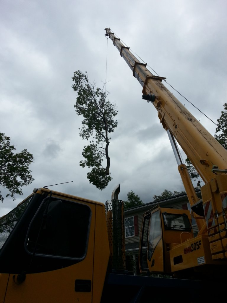 Crane is used to remove large tree in sections from tight spot in Woburn, MA--Middlesex Tree Service