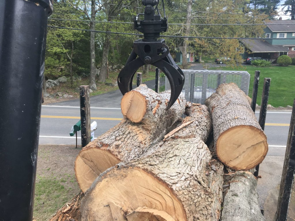 Logs removed from large tree removal Middlesex Tree Service