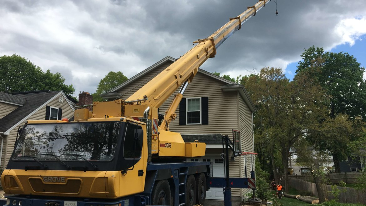Middlesex Tree Service can handle any size job