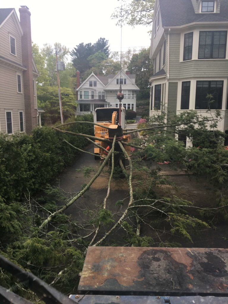 Chipping operation in close quarters during tree removal in Melrose, MA--Middlesex Tree Service