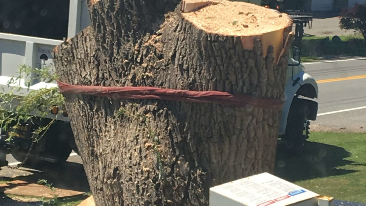 We can handle anything at Middlesex Tree Service