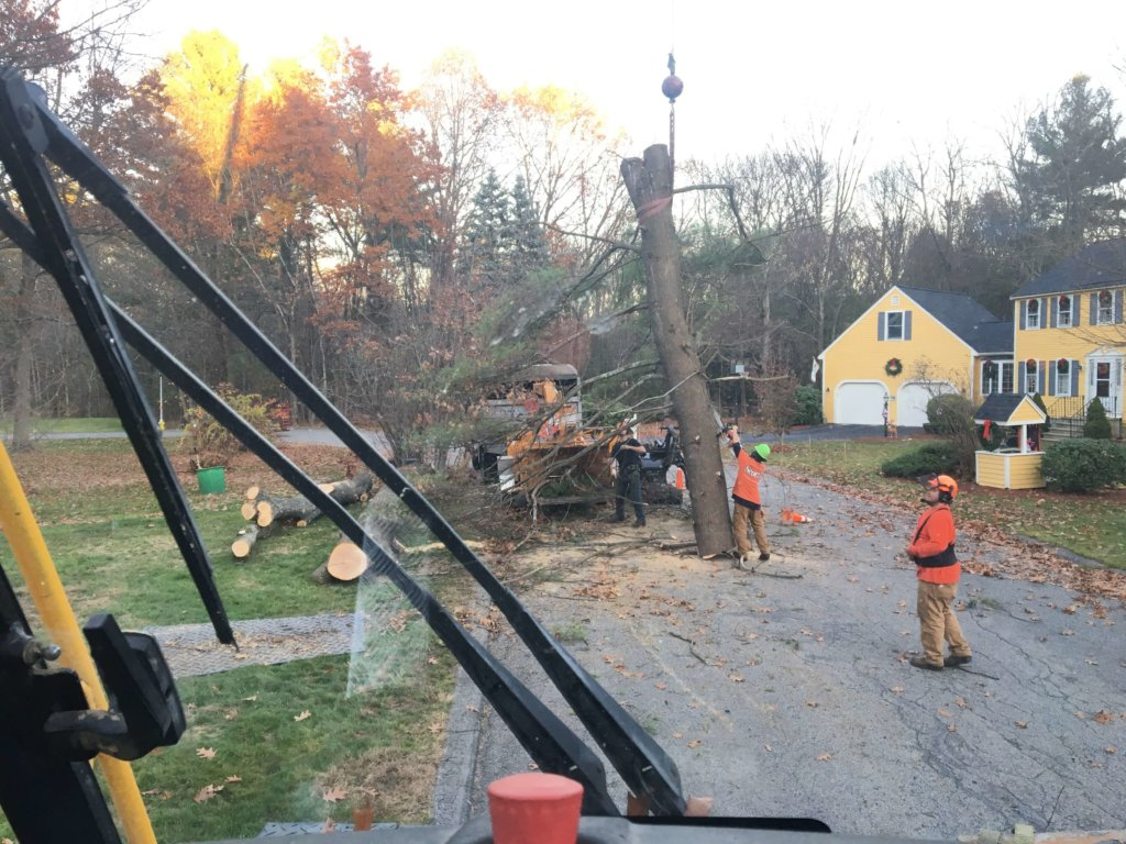 Crane is lowering a section of a large tree to the staging area--Middlesex Tree Service