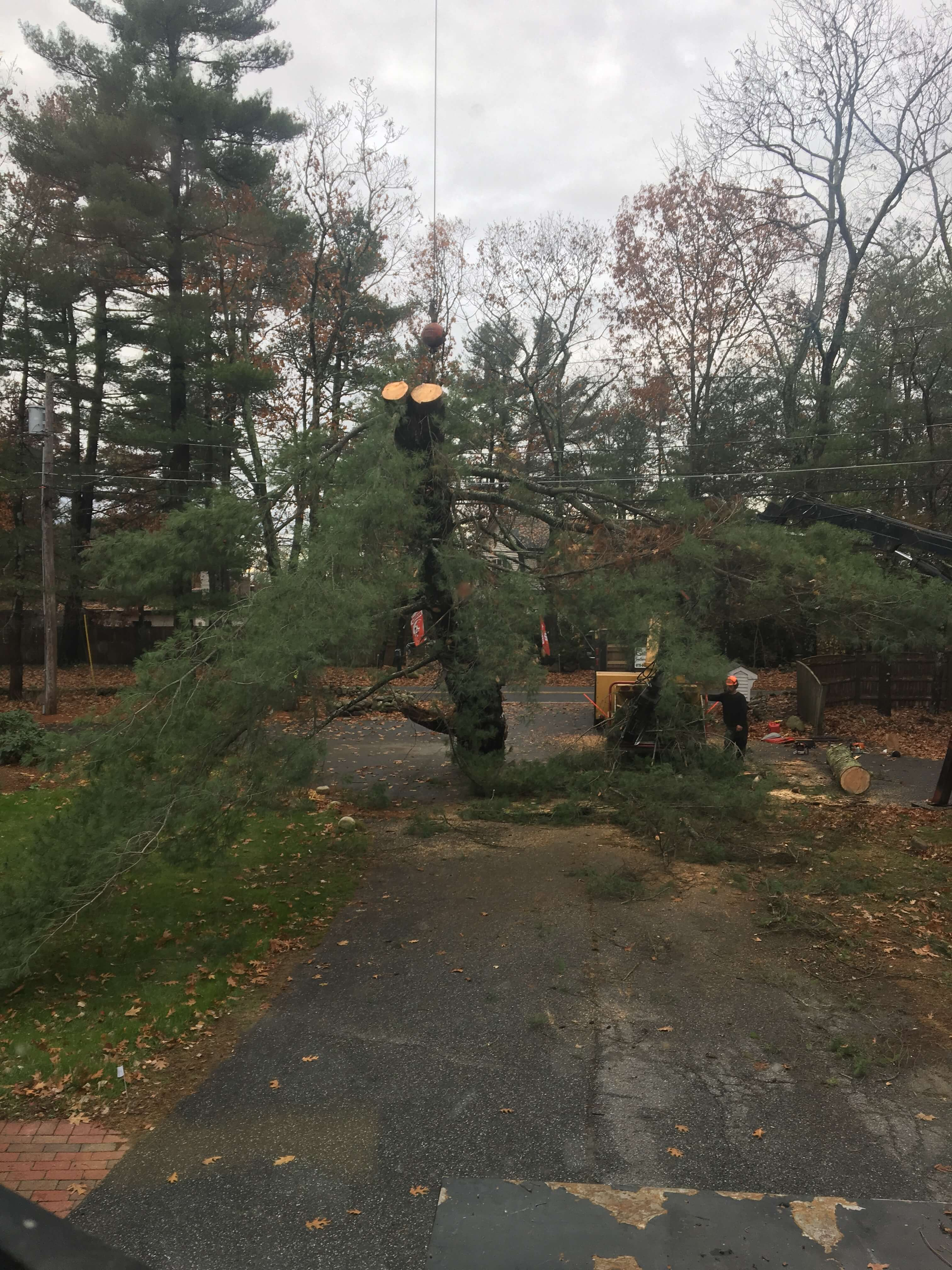 Wind storms are no match for Middlesex Tree Service