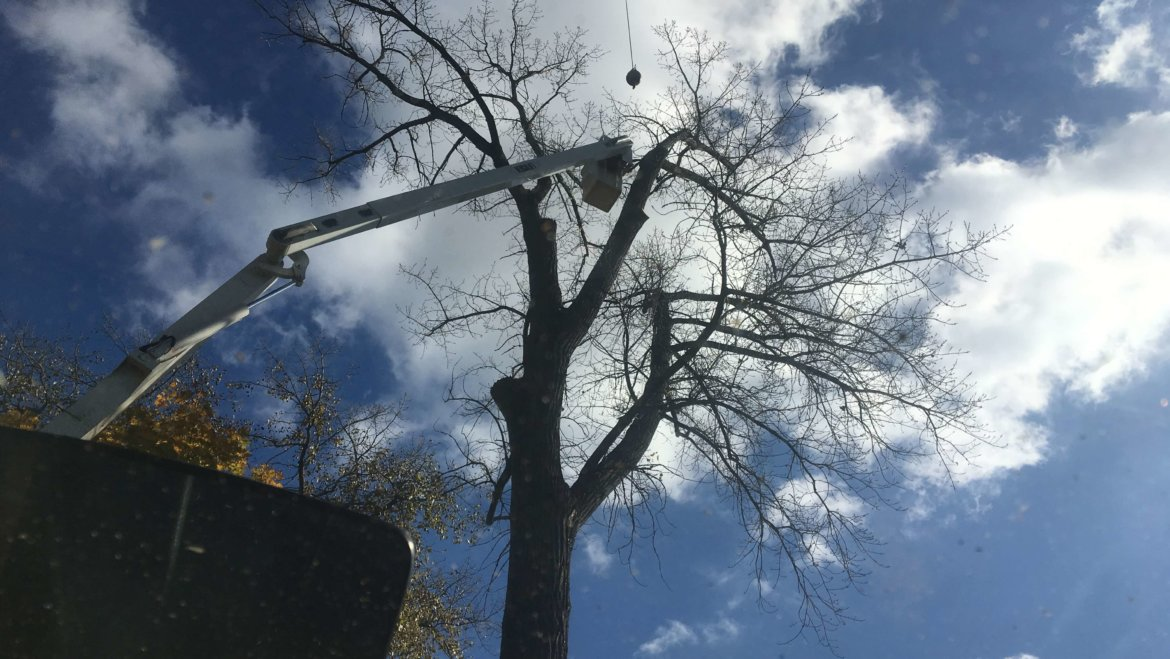 Done right, tree removal is a beautiful art