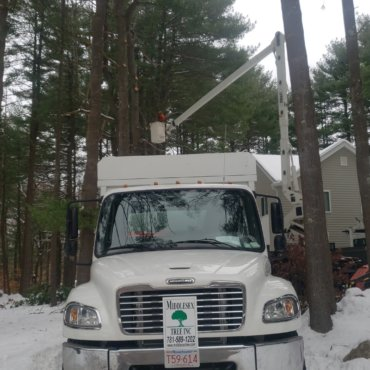 Tree removal and trimming in Lexington, MA