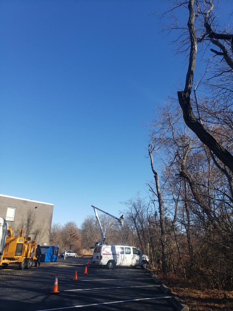Tree removal and trimming in Belmont, MA