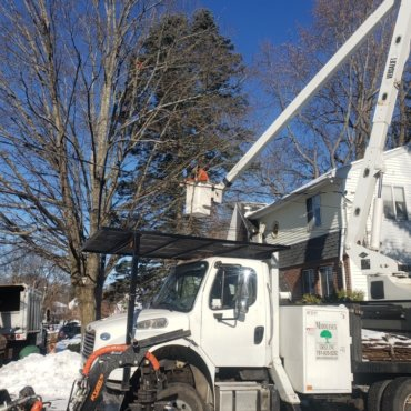 Tree removal and trimming in Woburn, MA
