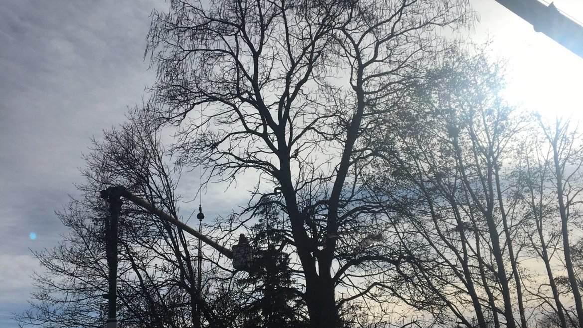 Tree removal in Woburn, MA